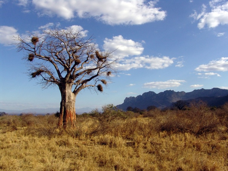 baobab harmonie et boucles.jpg